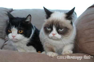 Foto Grumpy cat, kucing yang selalu cemberut