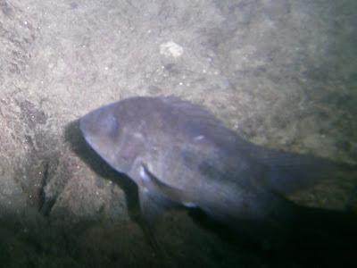 Dive Nicaragua