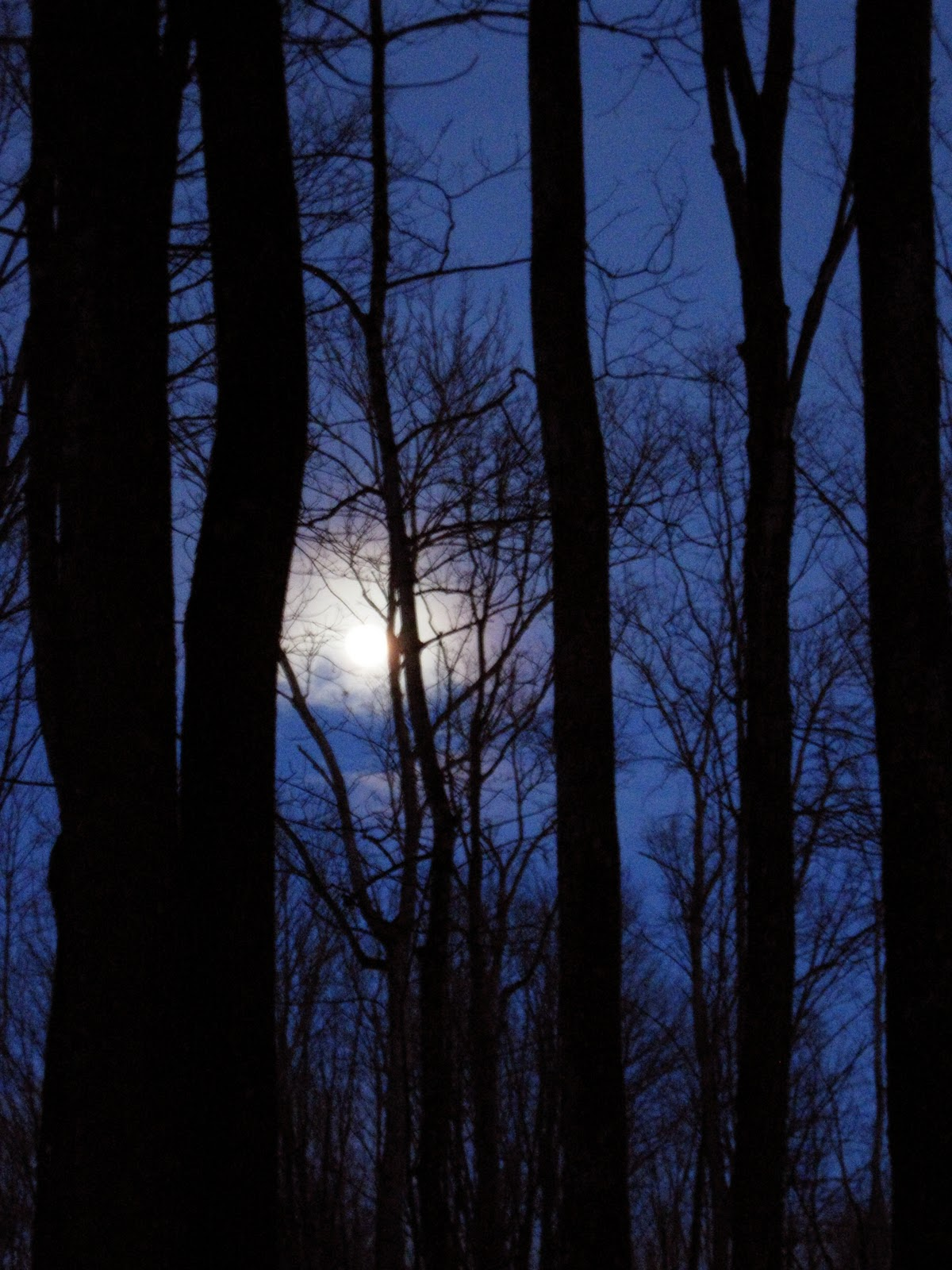 alone-in-the-woods moon  Creepy Woods Moon
