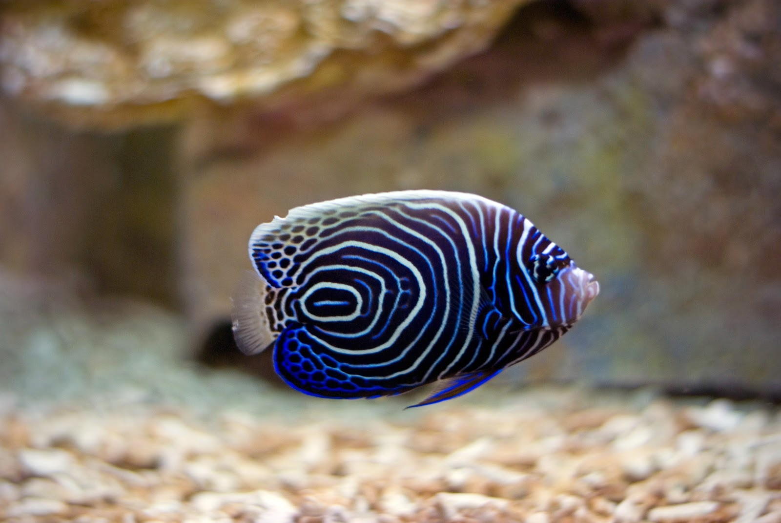 Free Wallpaper Download Tropical Fish Wallpaper Pictures