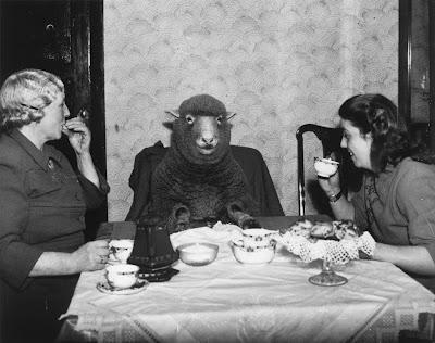 tea time with a sheep
