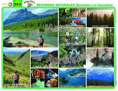 Recursos naturales for Tipos de plantas forestales