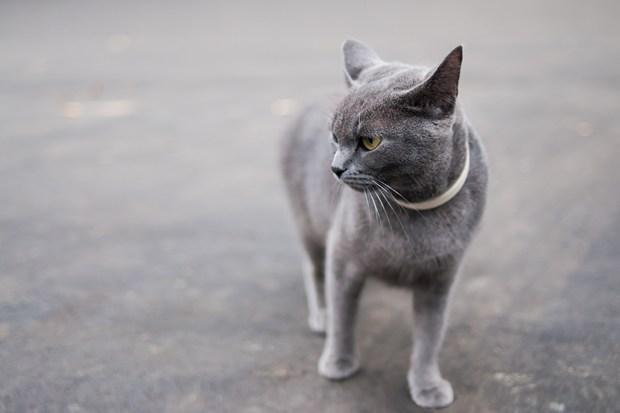 Seekor kucing jalanan menjadi petunjuk kunci dari Hacker berharga 3 juta Yen yang saat ini tengah menyerang pengguna internet Jepang