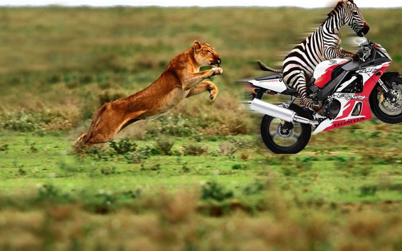 Labels Animals Pictures Wallpapers Zebras