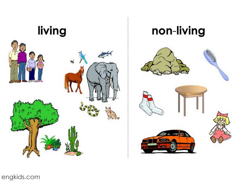 Free coloring pages of living vs non-living