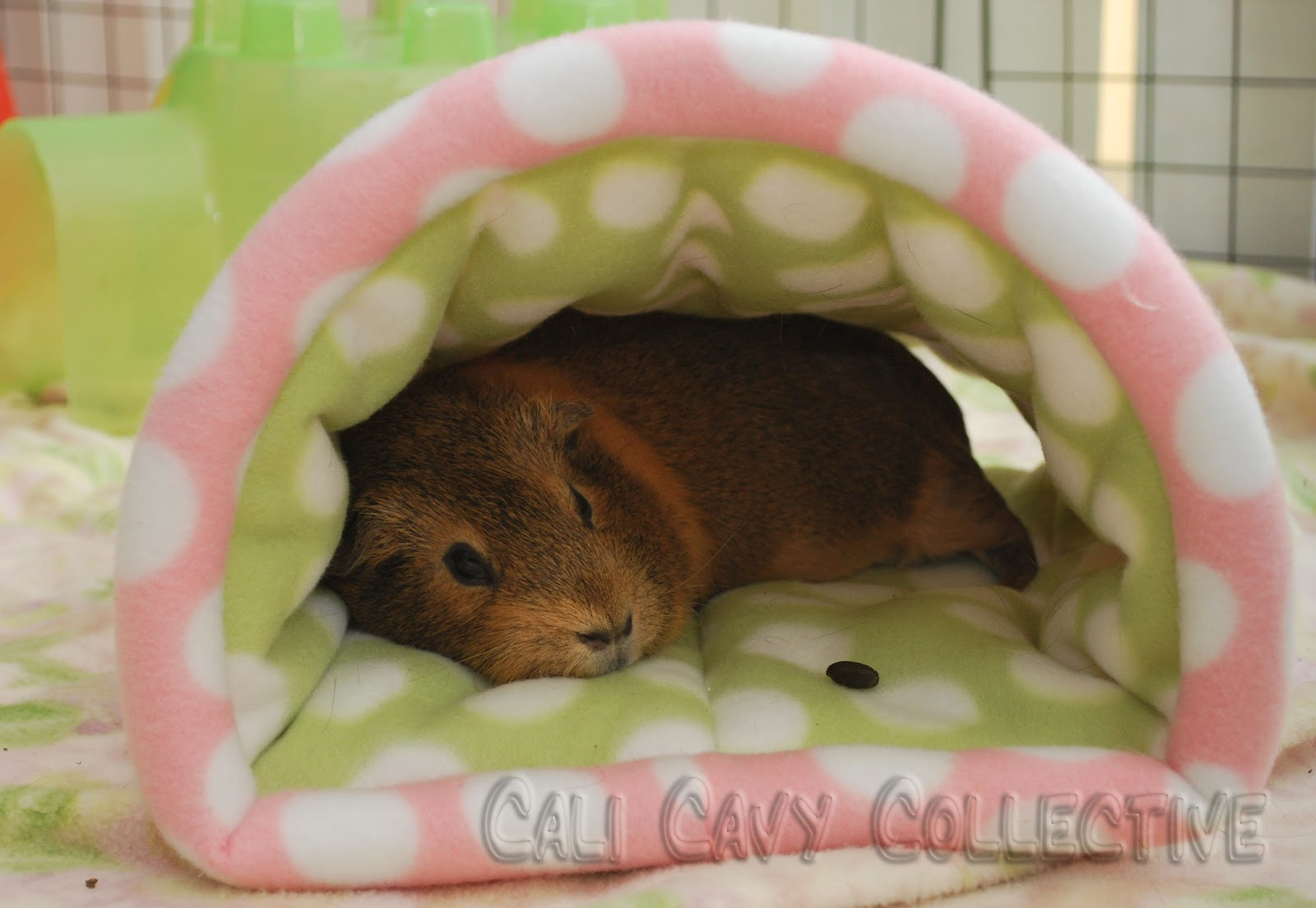 Guinea Pig Bedding Fleece 28 Images Pin By Missy Hoss