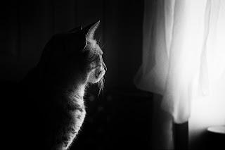 Gato mirando la ventana