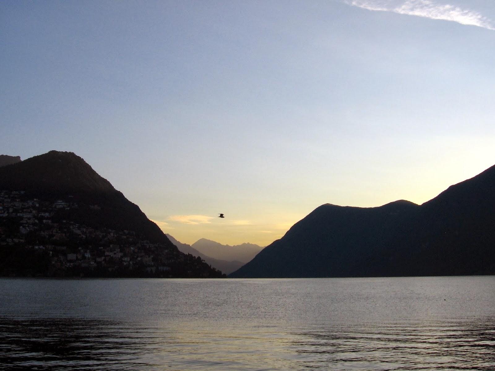 Lugano Lake Bird Flying