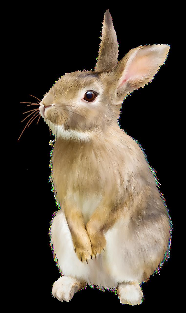 Картинки детские кролик