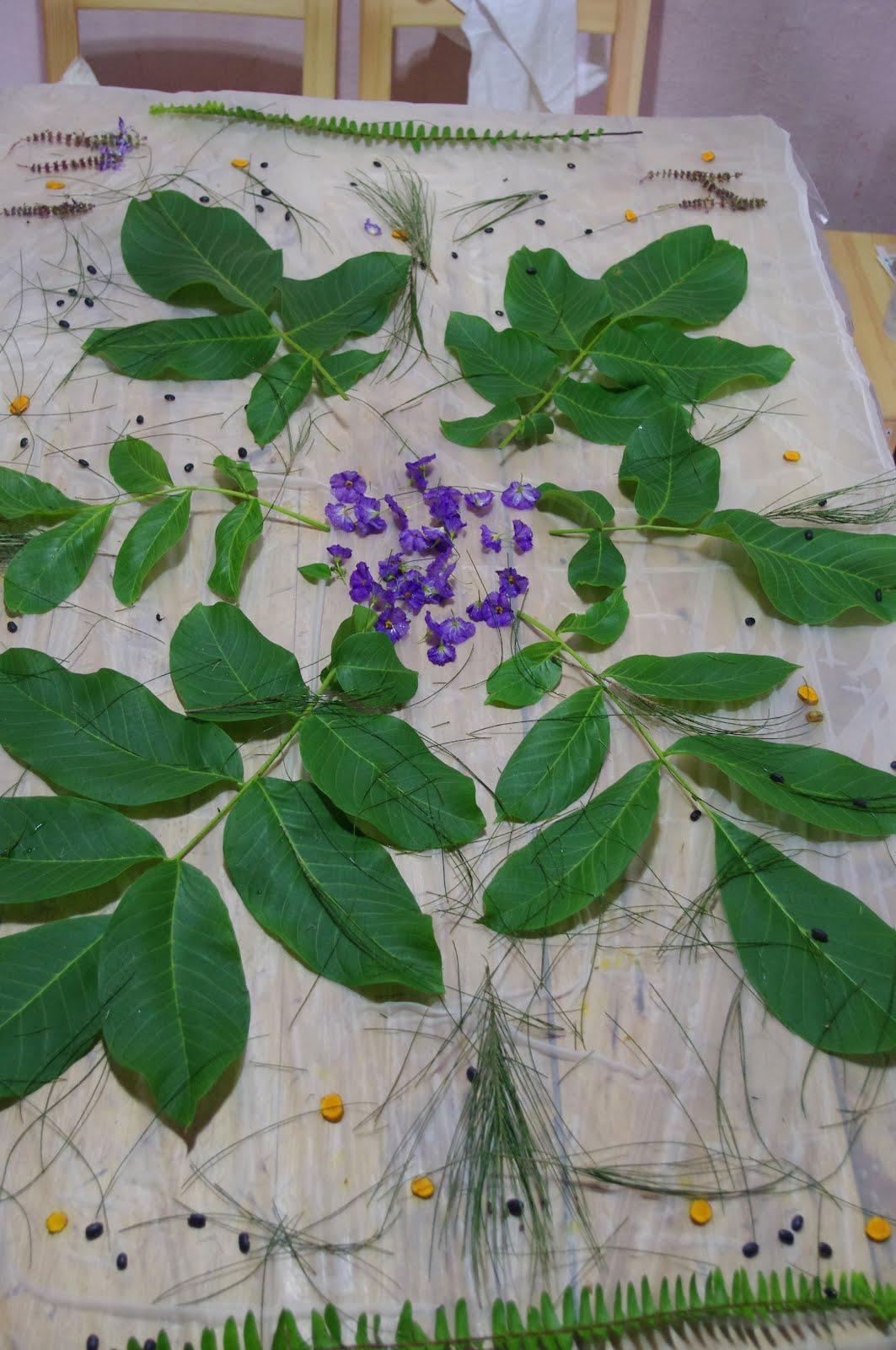 memorias das plantas