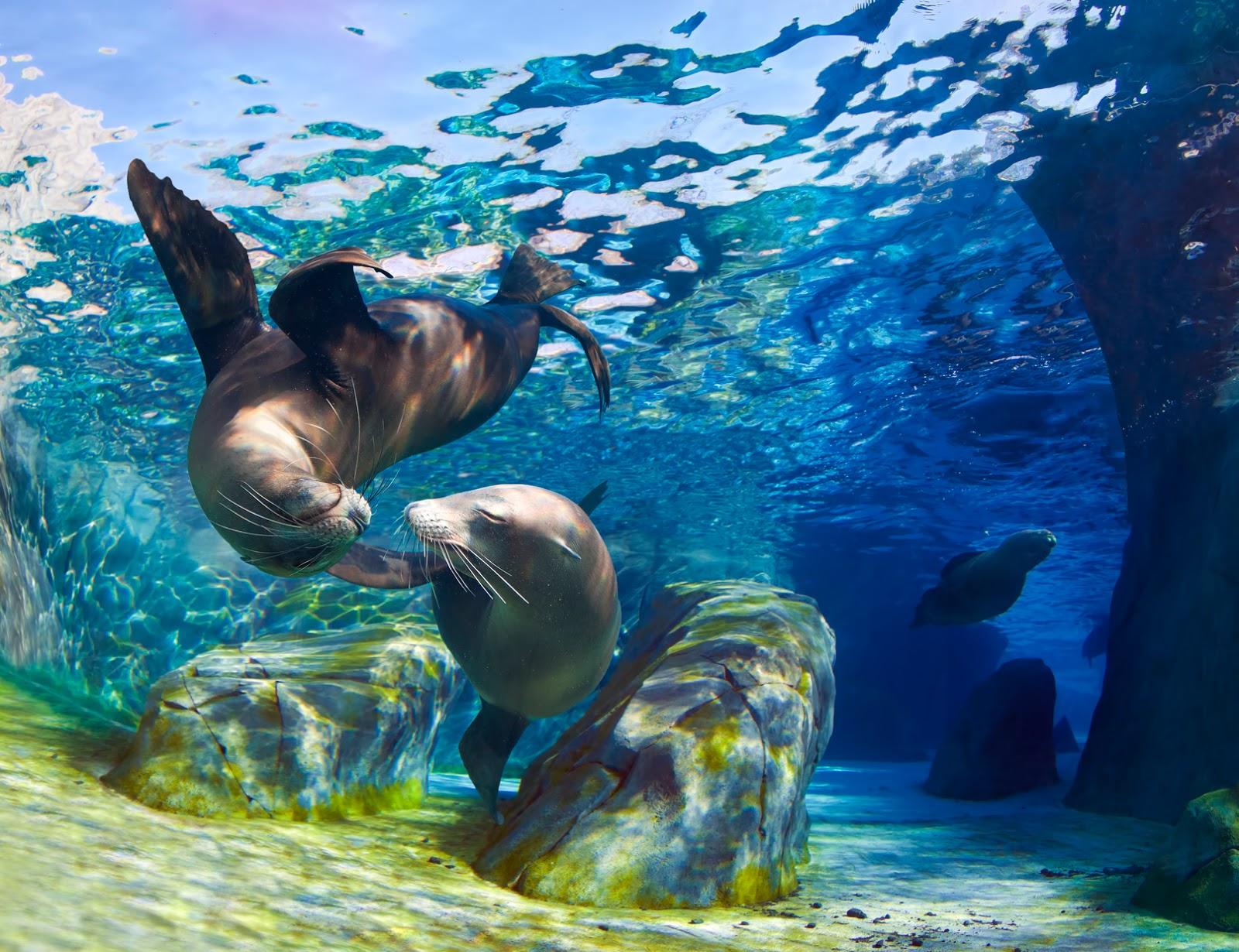 Vida en el mar on pinterest del mar angelfish and mars - Fotos fondo del mar ...