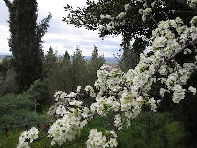 Pala Italiaa - Kukkiva puu