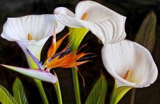 Pinturas de Flores Alcatraces