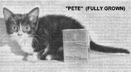 in 1973 pete the cat 2 was tipped to become the official smallest cat in the world weighing 339 grams 075 lbs at 3 months when his littermates