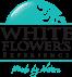 White Flower`s