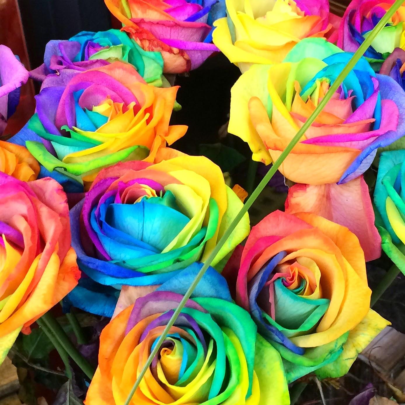 rainbow-roses