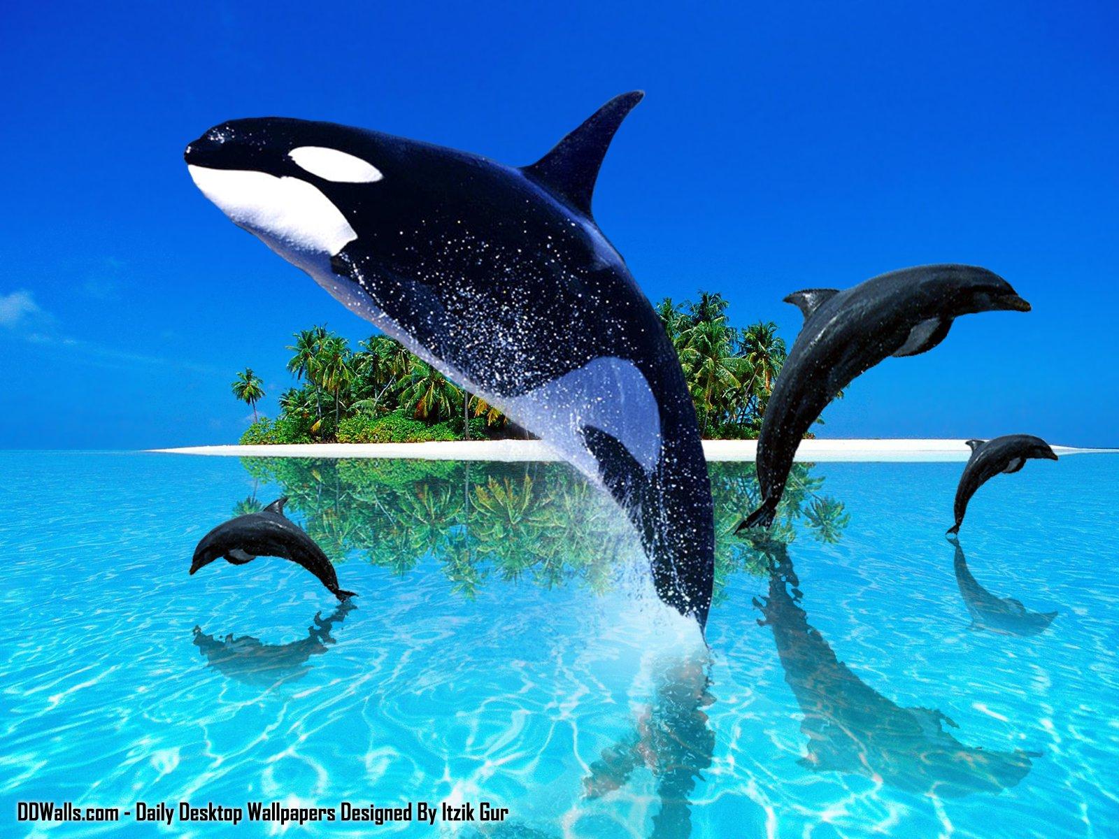 http://3.bp.blogspot.com/-h9QkDdkMl1E/T-ezLbzb8AI/AAAAAAAAAFI/LJfIkJpDPE4/s1600/animales-47del.jpg