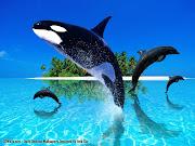 Los delfines son a menudo considerados como unos de los animales más . (animales del)