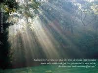 Enquanto o sol coar pelas árvores, a esperança mantêm-se