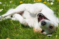 I'm a Dog Person!
