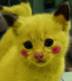 Kucing Lucu Pride
