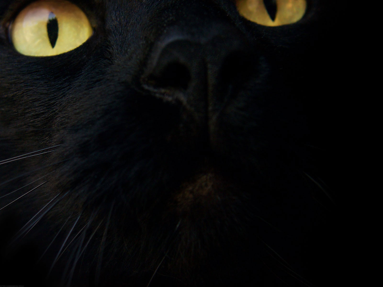 Black+Cat+Wallpaper+Hd+Wallpapers+Backgrounds.jpg