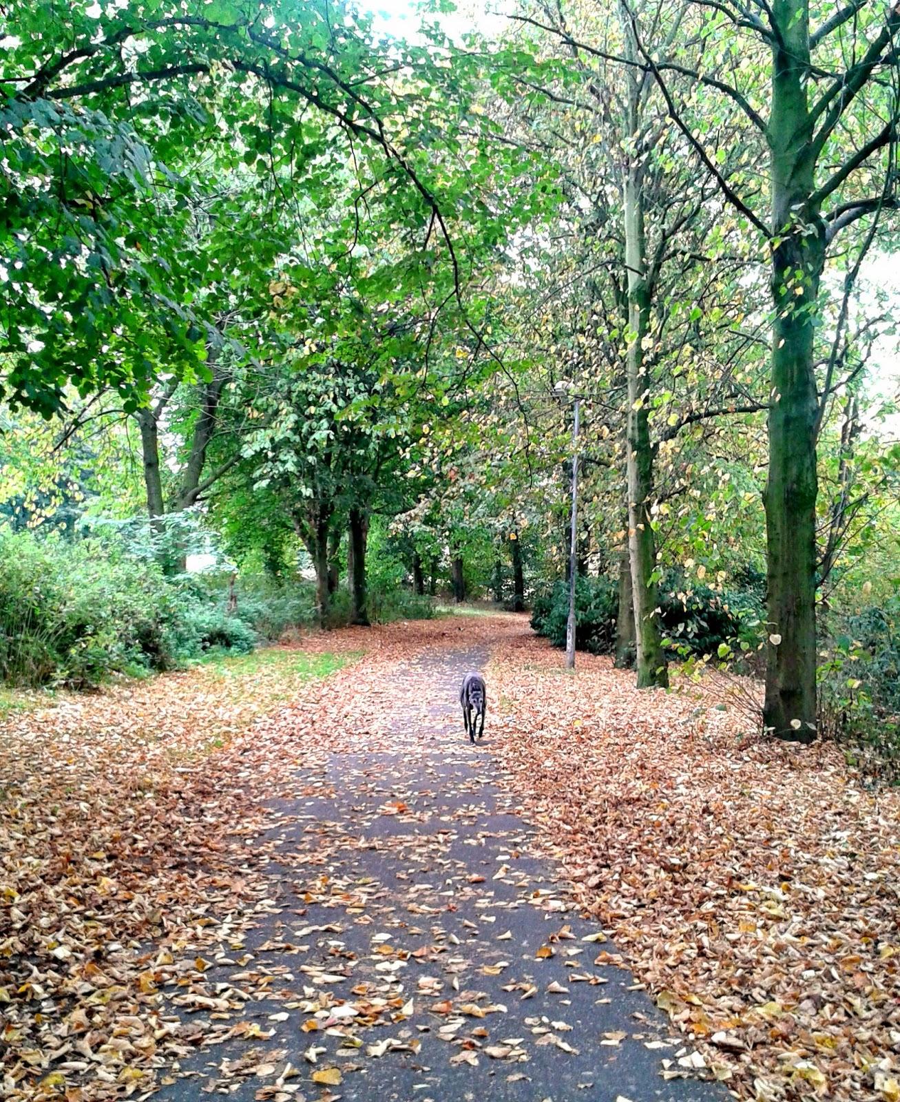 Autumn walk with Tess