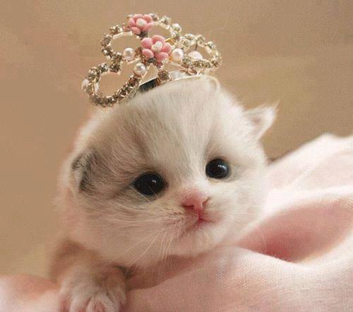 Imagens de Gatos Fofos para deixar sua vida mais bonita.