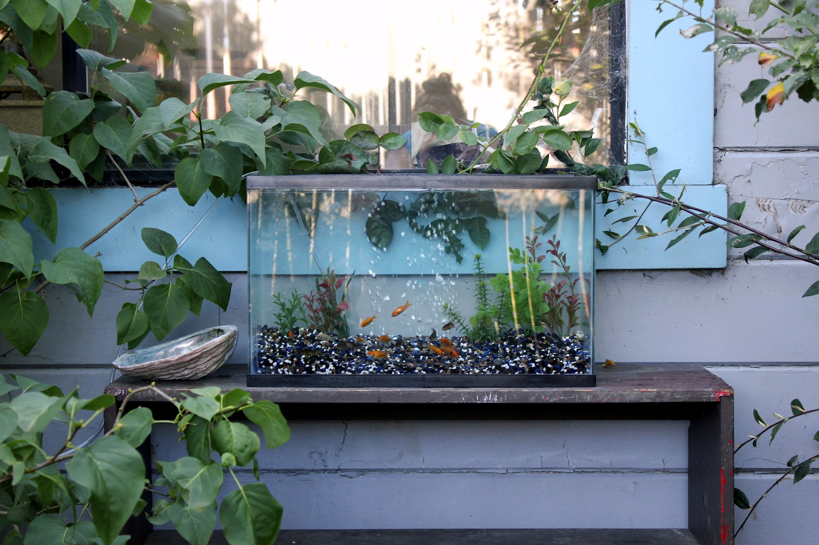 Bonnie wee birds outside fish tank idea for Outside fish tank