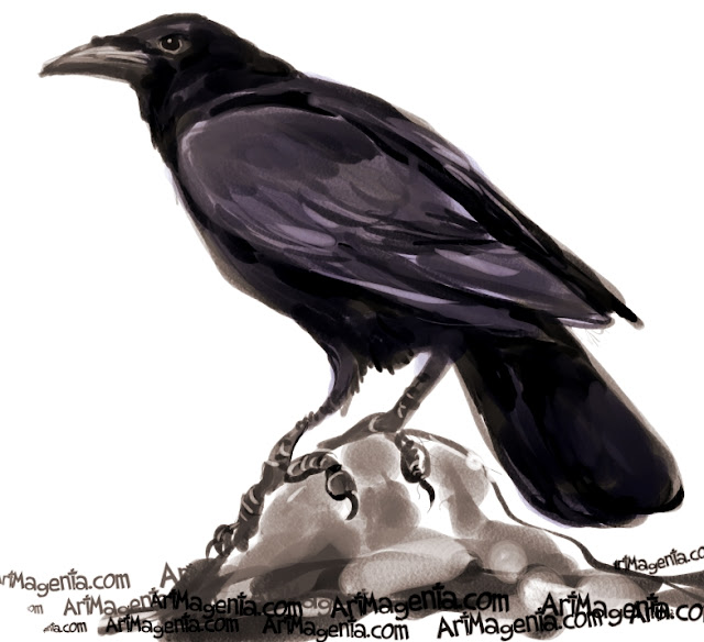 American Crow sketch painting. Bird art drawing by illustrator Artmagenta