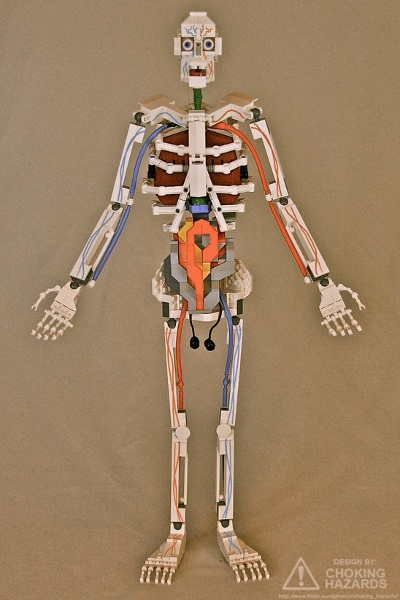 Choking Hazards: Lego Anatomy (front)