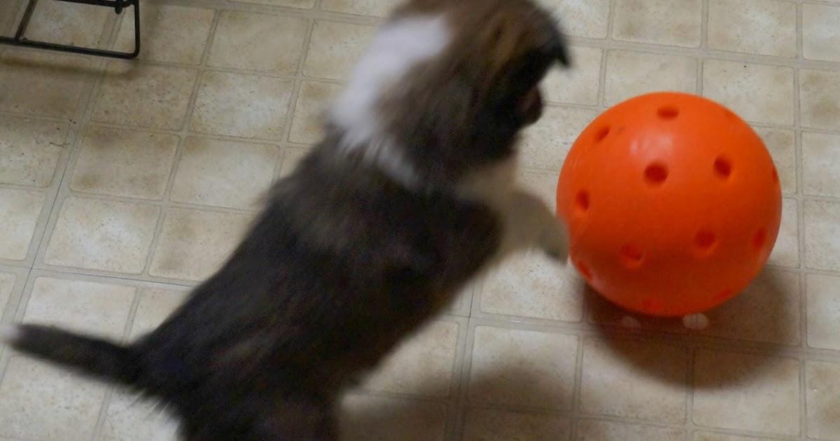 Tough Dog Toys For Dobermans