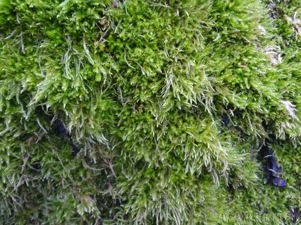Bright green moss in Vancouver