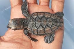 Richard Branson And Necker Island Saving Endengered Species: The Animals of Necker Island