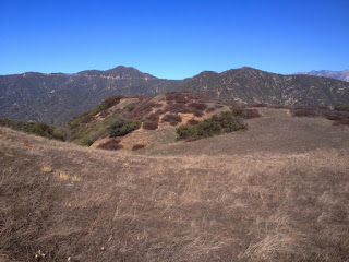 View north toward Pine Mt. (left, 4539') and Silver Mt. (right, 3385') from the ridgeline of Summit 2843 separating Roberts Canyon (left) and San Gabriel Canyon (right), Angeles National Forest