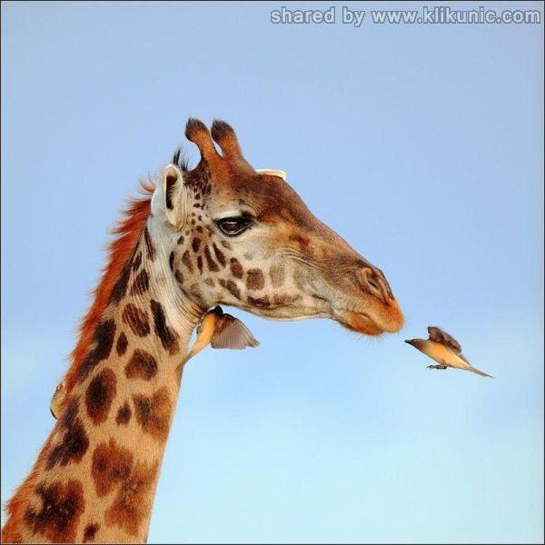 http://3.bp.blogspot.com/-hBgmzsMPsJ4/TXlomPi7jGI/AAAAAAAAQzA/SoD0yb2x3Nk/s1600/these_funny_animals_635_640_06.jpg