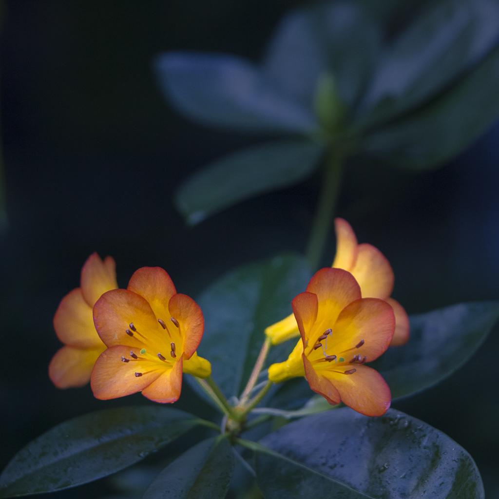 http://michaelharris.photoshelter.com/gallery/Flowers/G0000OuqN_Adl_sc/C0000nBnHIP7EjqM