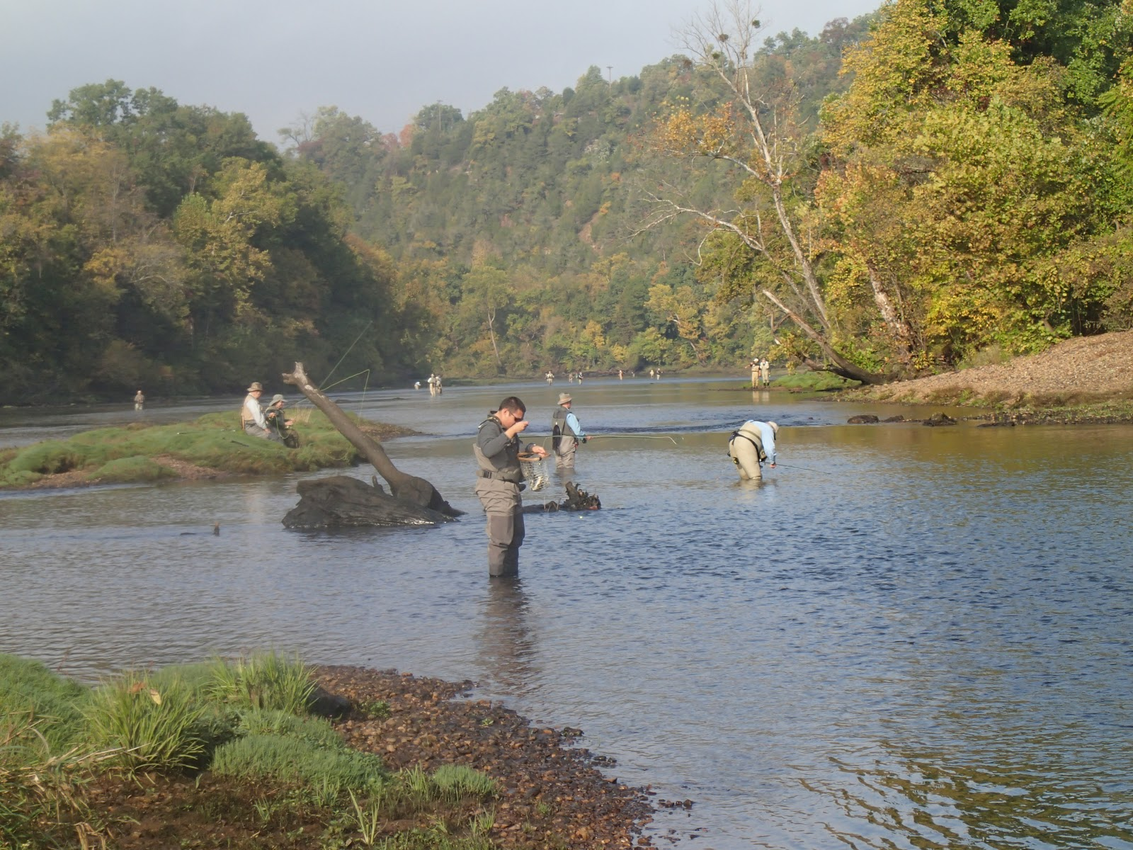 Fly in the south norfork river report for Lake norfork fishing report