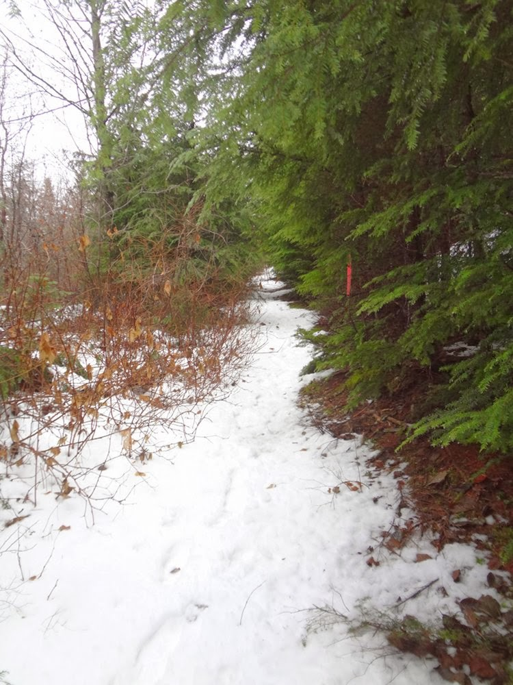 Trail towards Brunswick Mountain