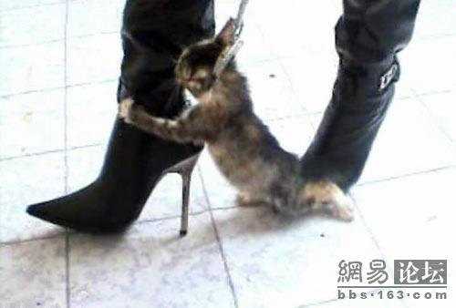 1a85e5e316e Images of High Heel Kitten Killer