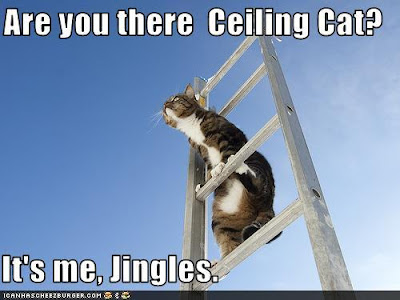 cat on a ladder with caption saying are you there ceiling cat? it's me Jingles
