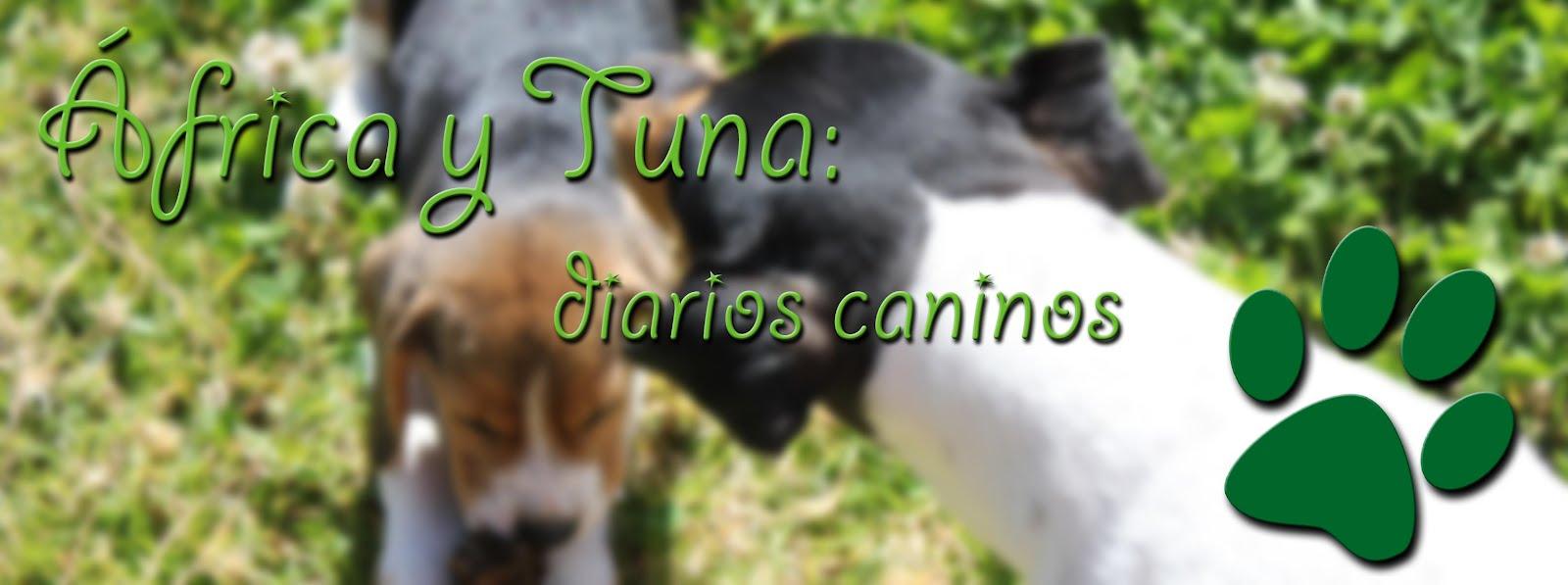África y Tuna: diarios caninos