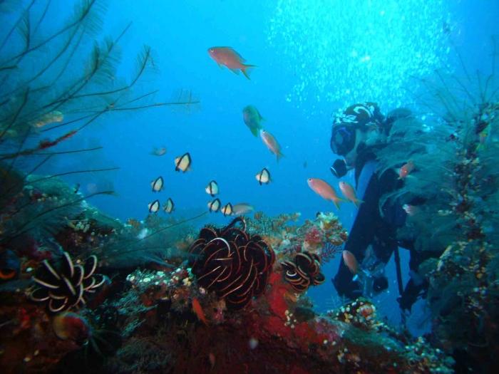 Bali Under water scuba