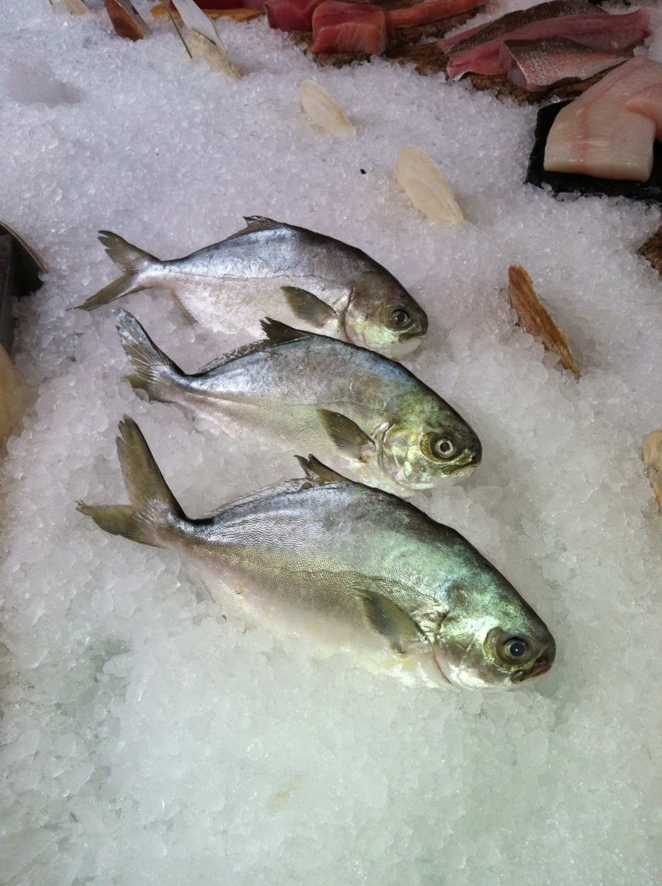 The edible ocean september 2012 for Edible freshwater fish