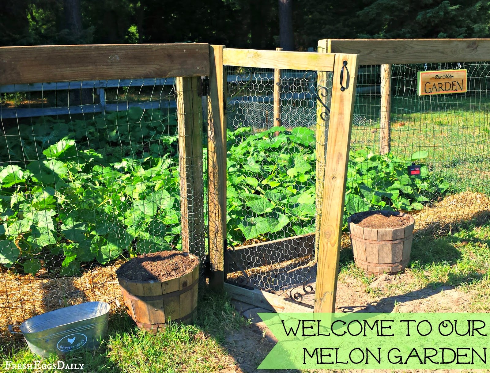 our new melon garden stage one tilling and planting fresh