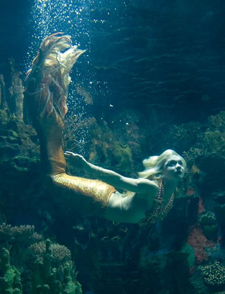 the existence of mermaids 8-year-old ponders existence of mermaids, receives detailed letter from real scientist.