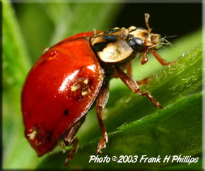 Pictures of insects and bugs |Funny Animal  Insects