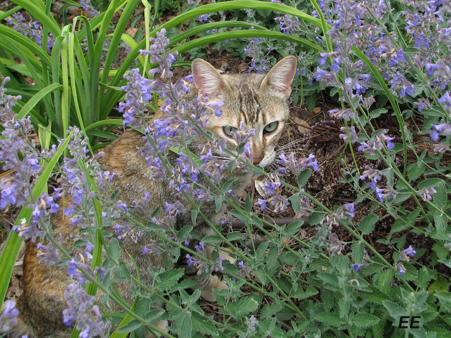 gato droga flor: