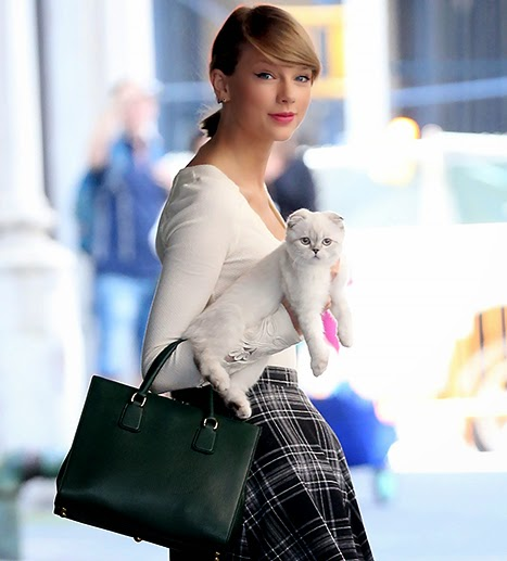 Taylor Swift explain why she wears cat Olivia Benson with him to New York City