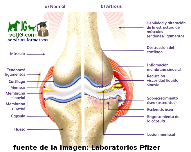 external image artrosis%2Bde%2Bla%2Brodilla.png